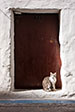 Essaouira - Life in the Medina. Cat Step.