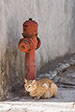 Cats of Chios. Aghios Georgios Sikousis, Chios