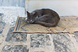 Cats of Chios. Pyrgi, Chios
