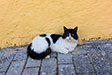 Cats of Chios. Tholopotami, Chios