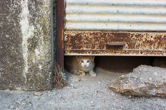 Cats of Chios, Kalamoti, Chios